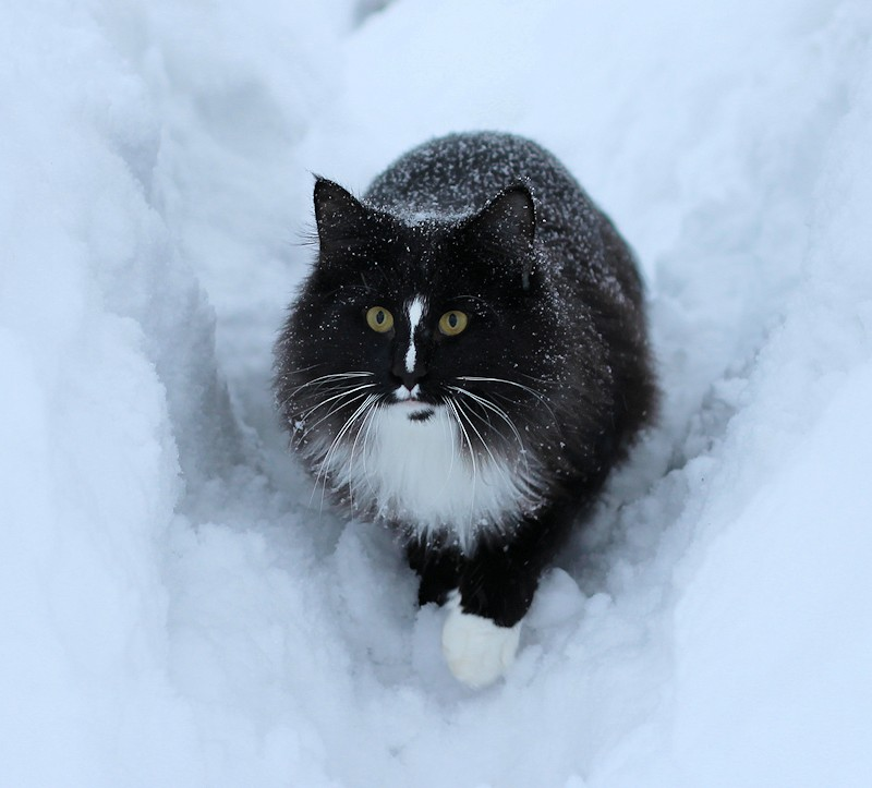 Ruskprick in the snow
